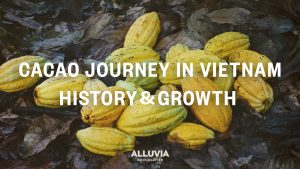 History of cacao in Vietnam